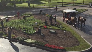 Gardeners working to replace the early spring tulips with June flowers.