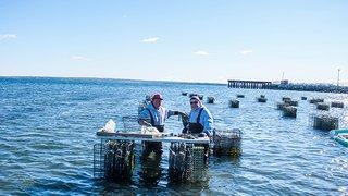 Allen Harbor Oysters
