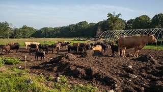 Sunset Farms