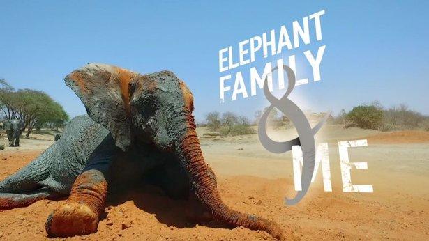 Elephant Family and Me