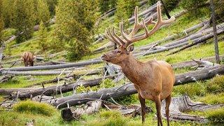 Great Yellowstone Thaw