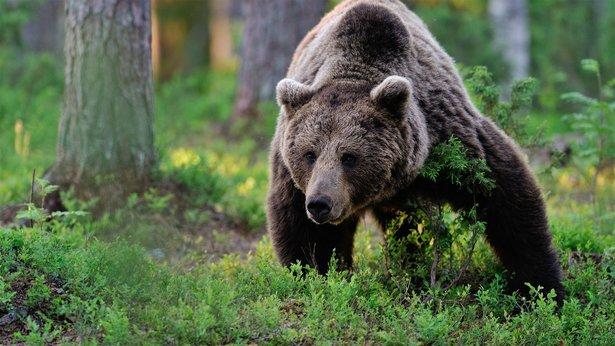 Wonder of Animals Bears #