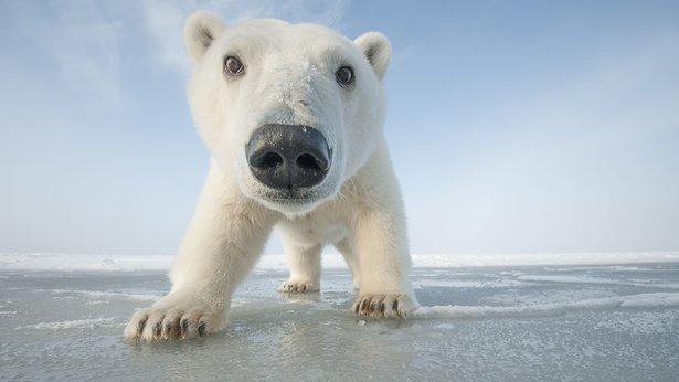 Nature: Snowbound – Animals of Winter