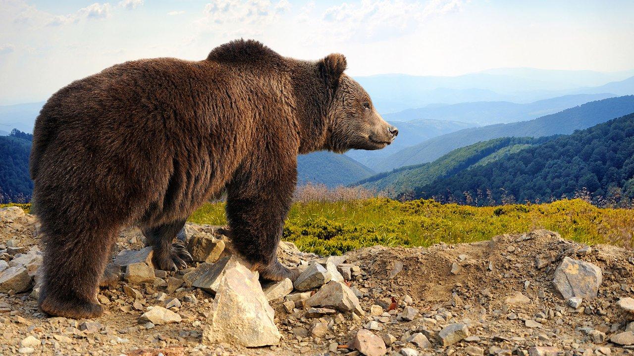 bear bioinformatics r u0026d