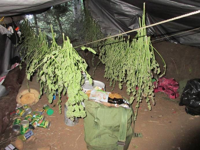 Colorado Black Market Marijuana