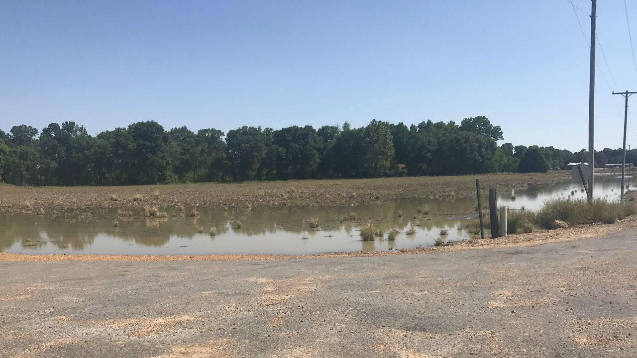 USDA Disaster Aid Approved for  Mississippi Farmers