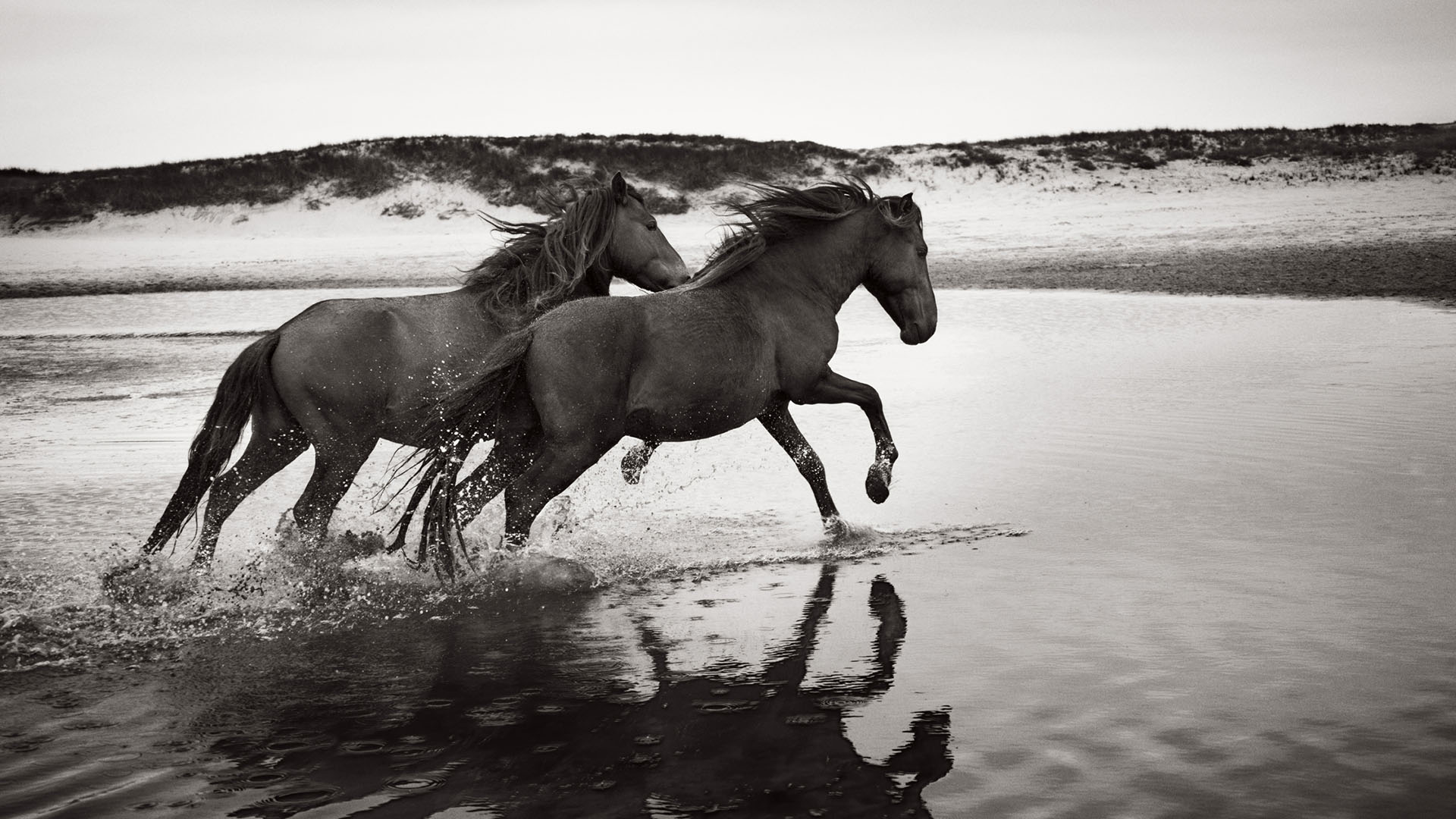Sable-Island-Wild-Horses-Drew-Doggett-Soulmates_MASTER.jpg