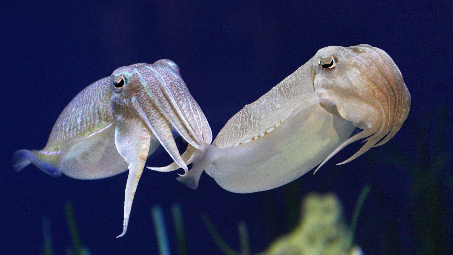 Animals at Monterey Bay Aquarium