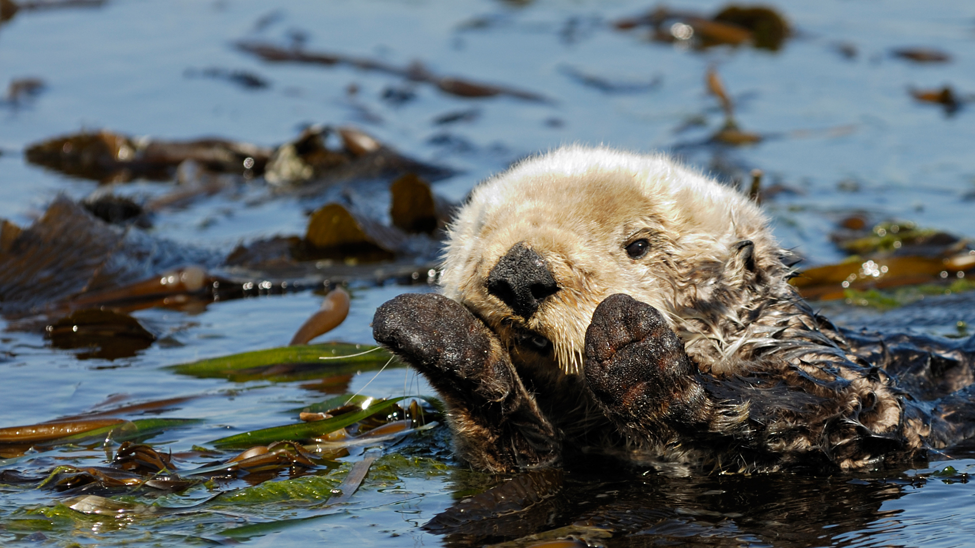LIVE | Elkhorn Slough Otter Cam
