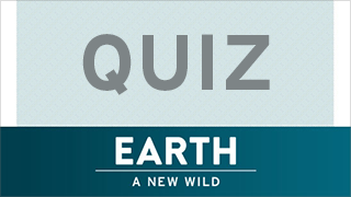 Play the Great Bear Rainforest Quiz