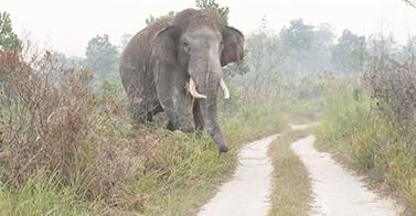 Conflict In Sumatra