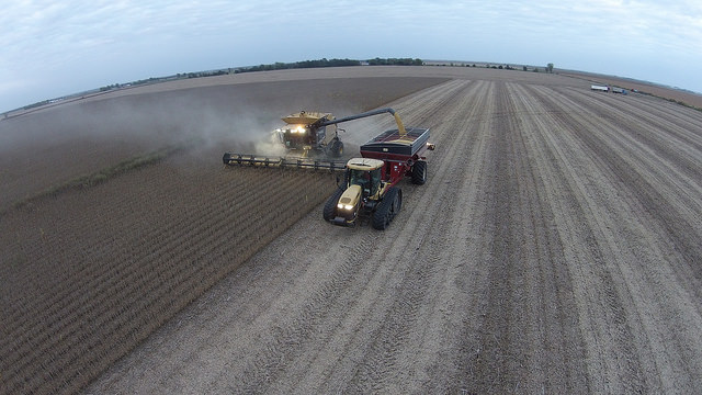 Soybean Harvest.jpg