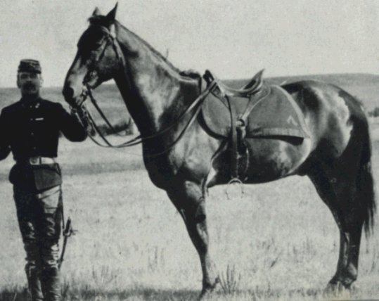 comanche at fort riley