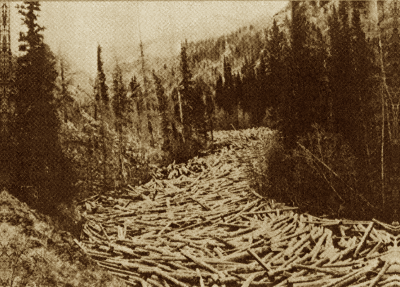 A log jam on the Medicine Bow River in Wyoming.