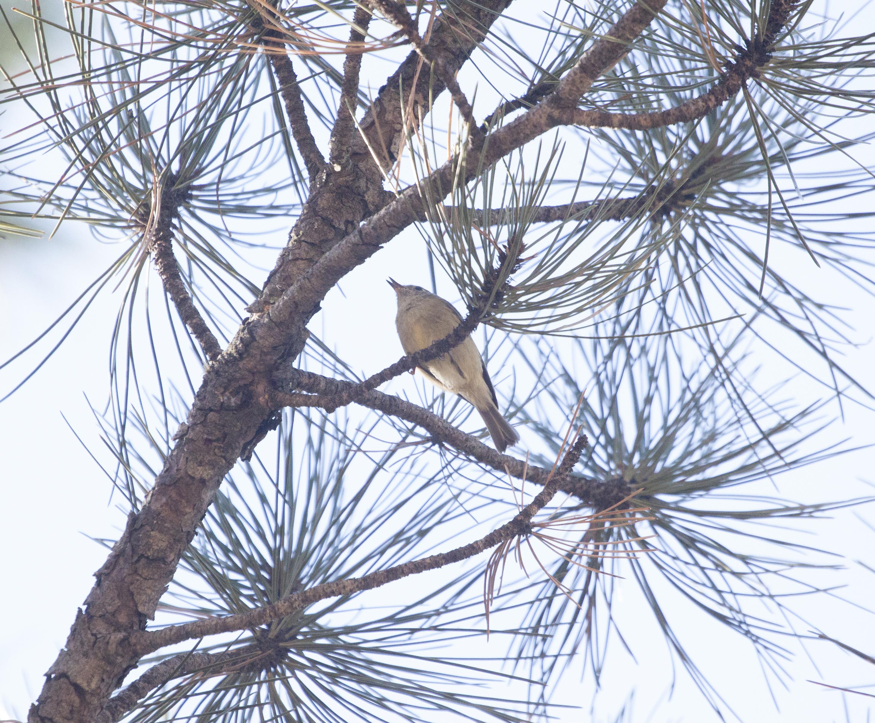bird6_.jpg