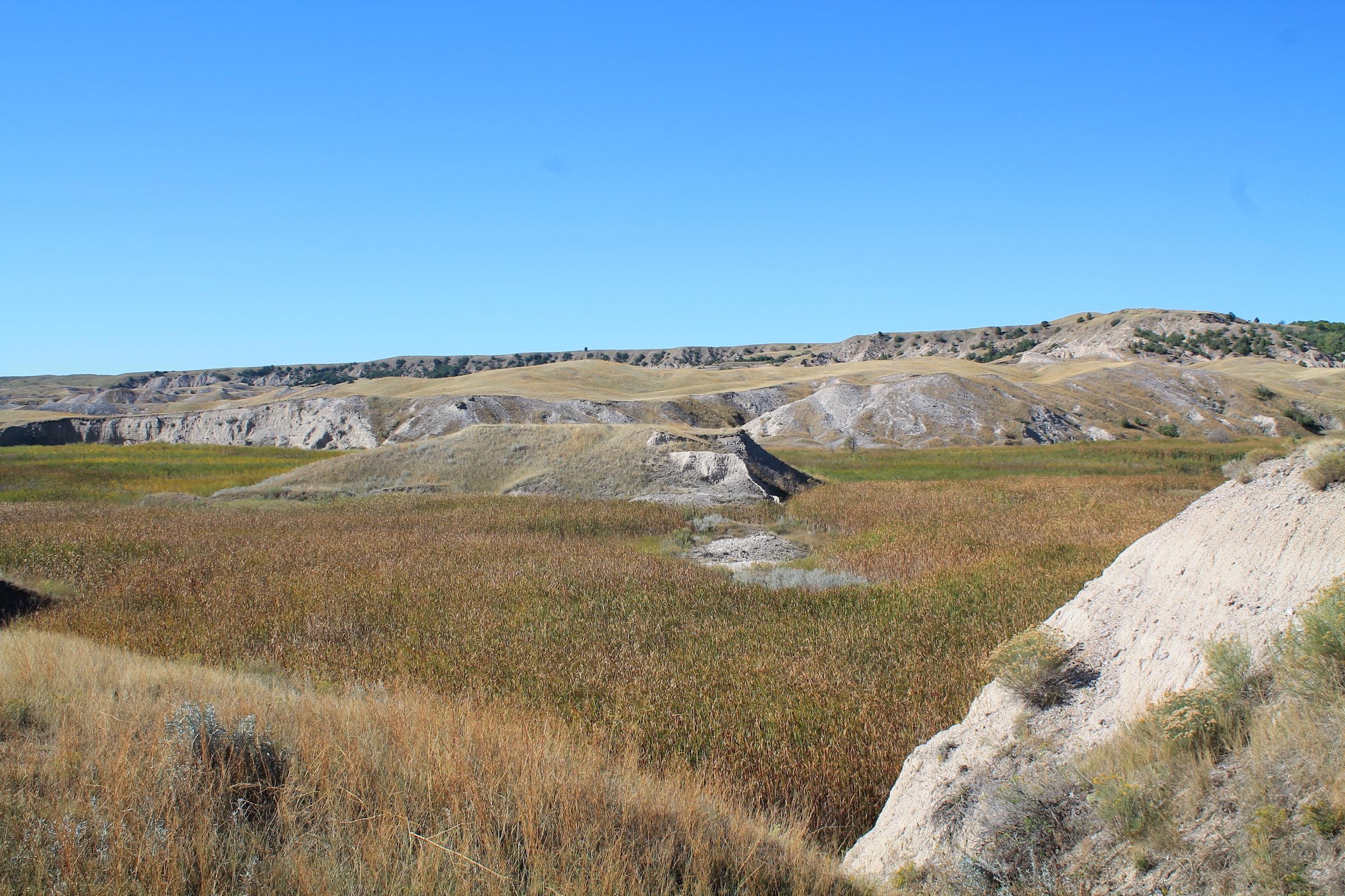 The Fog Creek marsh.