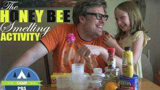The Honeybee Smelling Activity