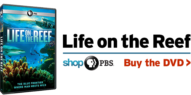 Shop PBS: Life on the Reef (DVD)