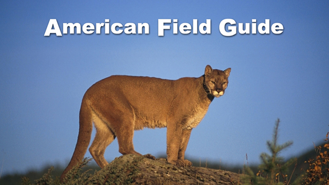 body_american-field-guide_1.jpg