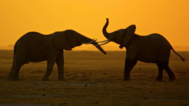 body_elephants_1.jpg
