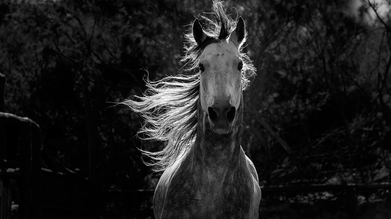 Nature: Equus – Story of the Horse