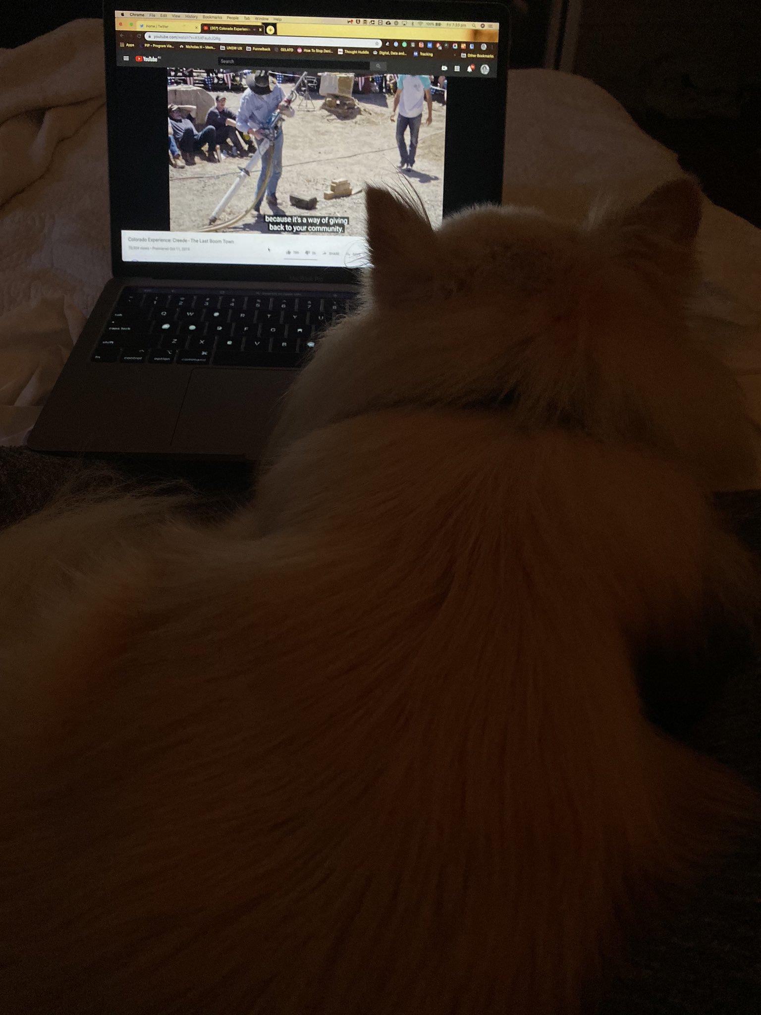 Dorg watching .jpg