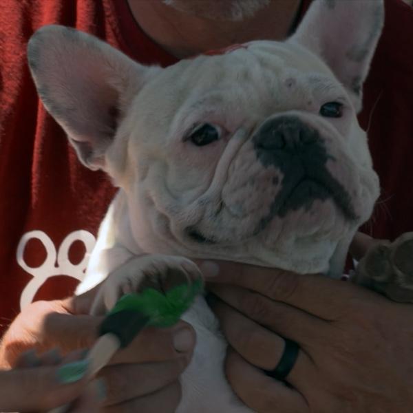Pet parents paint with prized possessions