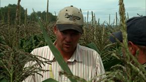 corn_290.png