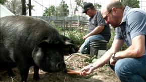 pork2_290.png