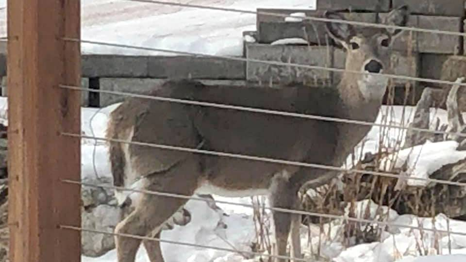 ON THE OTHER HAND: Backyard Wildlife Management