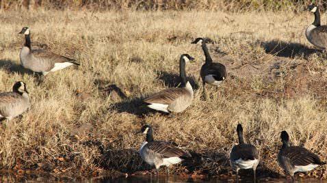 Wet, Snowy Spring Could Delay Bird Migration & Breeding
