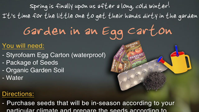 Garden in an Egg Carton
