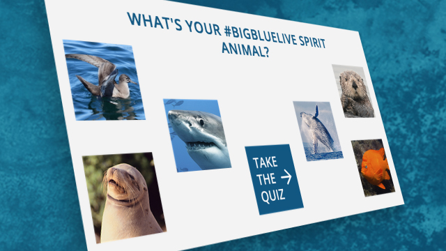 Take the Spirit Animal Quiz