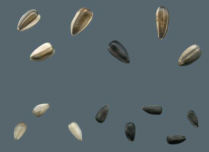 Identifying Seeds & Pollen (PDF)