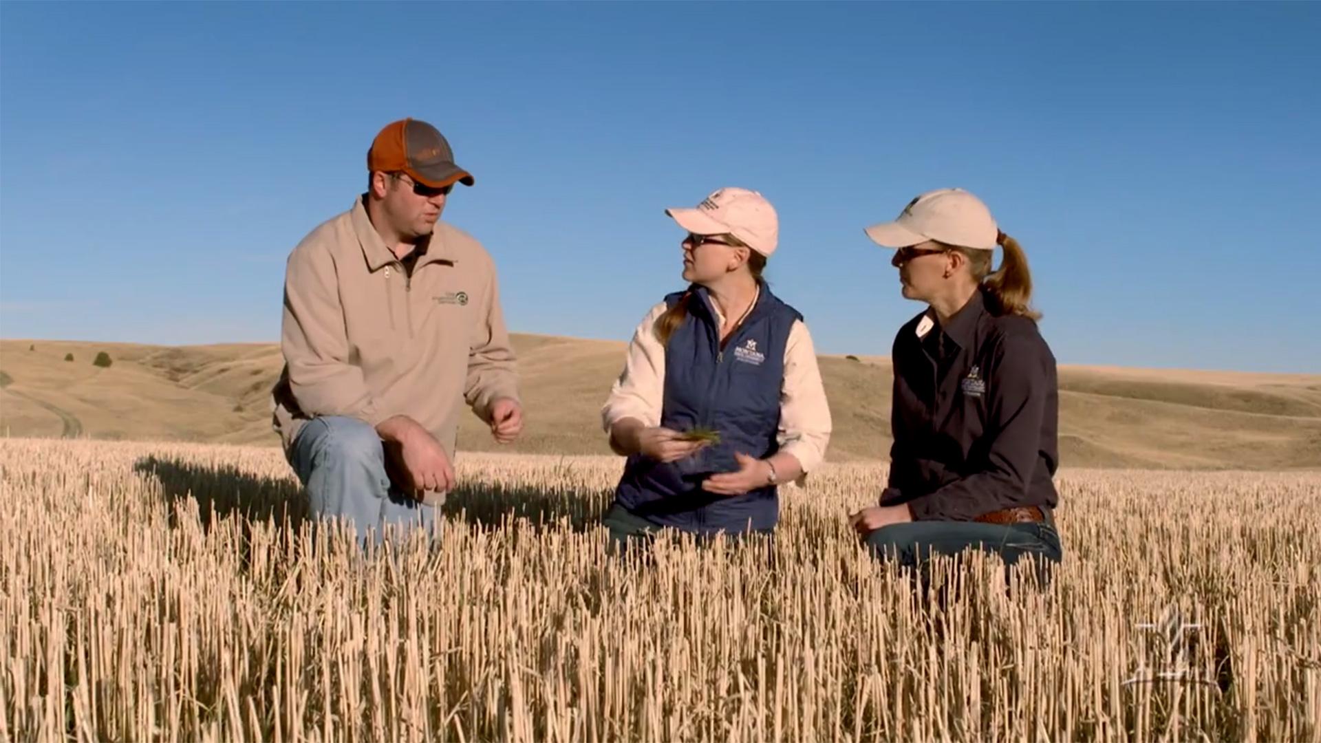 MSU Communications – Growing a Better Montana