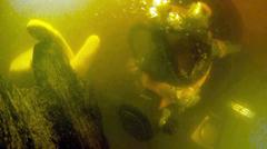 Scorpion_H thumb.jpg