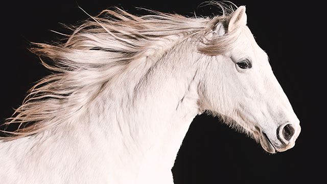 Nature: Equus: The Story of the Horse, Part 1