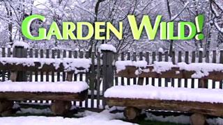 Garden Wild!