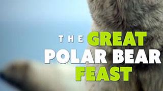 Great Polar Bear Feast