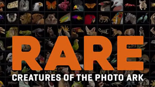 Rare - Creatures of the Photo Ark