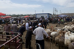men looking at sheep in a pen