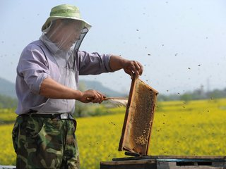 chinese-beekeeper-860f0f94f0cf16c6c37e1ff74c63bfb02f80b773-s900-c85.jpg