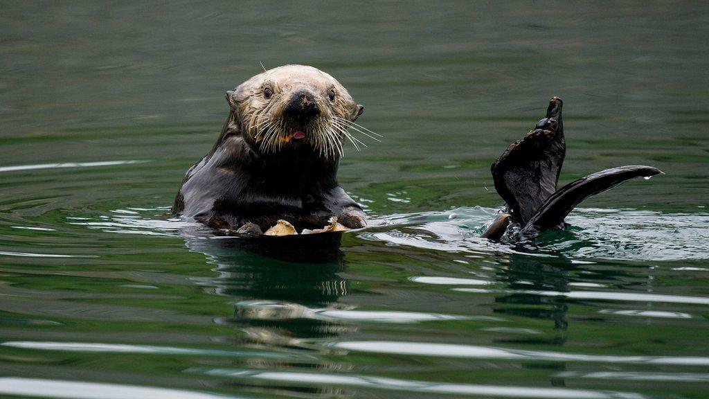 BBL_Otter.jpg