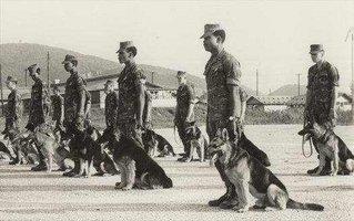 vietnam-war-dogs.jpg
