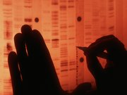 Scientist labels genome sequence