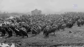 Historical vulture populations