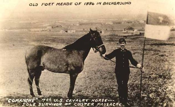 commanche at fort meade