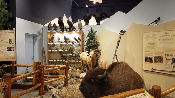taxidermy exhibit