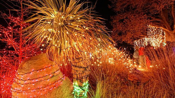 Amarillo Botanical Gardens' Christmas in the Gardens opens Friday.