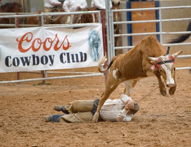 A cowboy from the XL Ranch goes on a wild ride at the Coors Cowboy Club Ranch Rodeo.